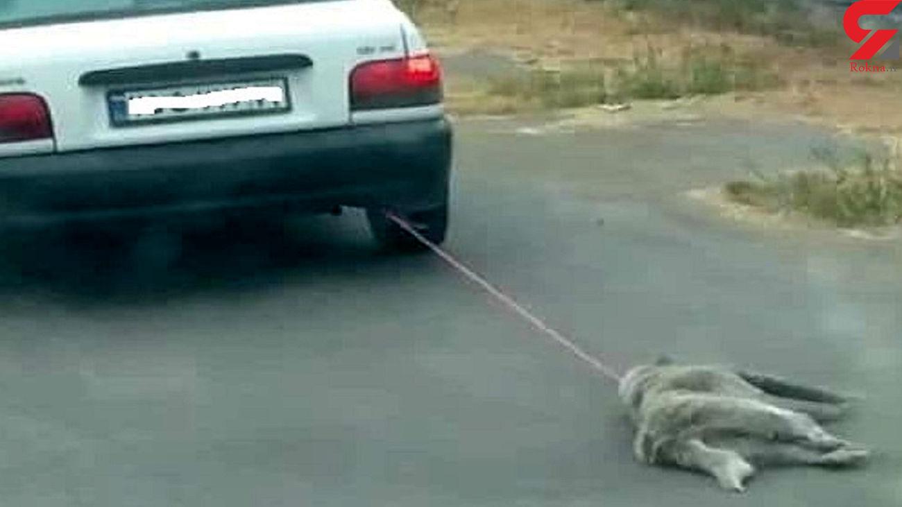 فیلمی تلخ از سگ کشی در مازندران/ سگ را با طناب به پراید بسته بود