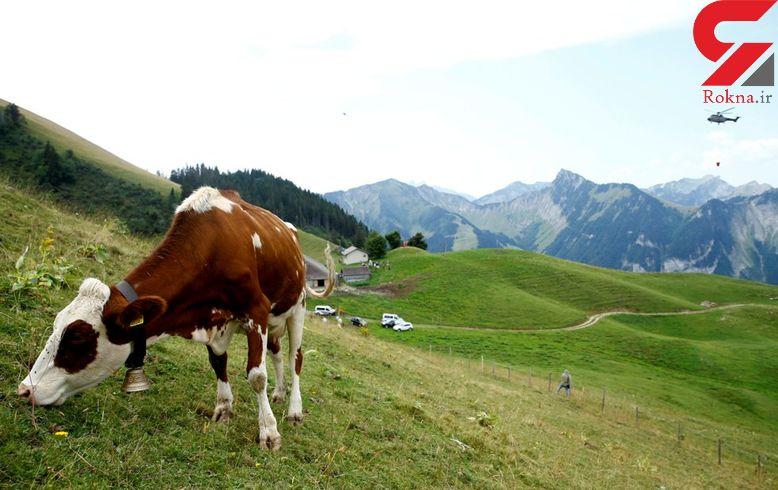 ارتش سوئیس به کمک گاوهای تشنه آمد