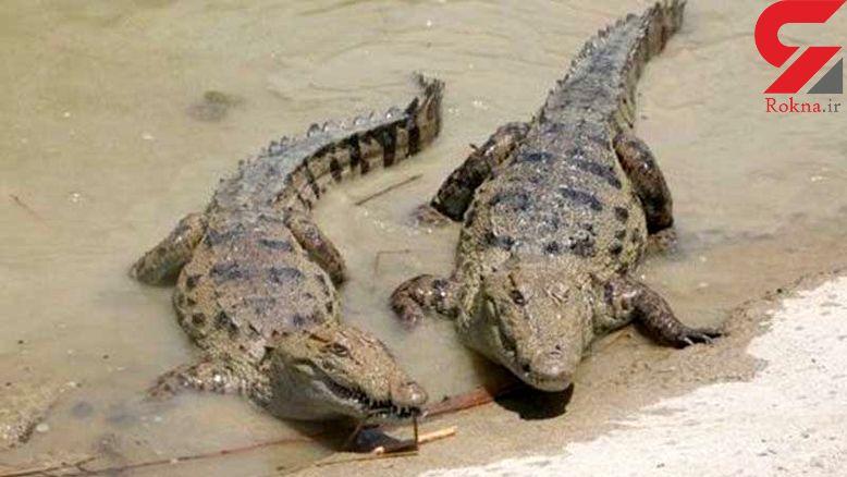 حمله تمساح ها به سیل زدگان سیستان و بلوچستان / هشدار جدی است