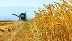وزیر جهاد کشاورزی از گندمکاران عذرخواهی کرد
