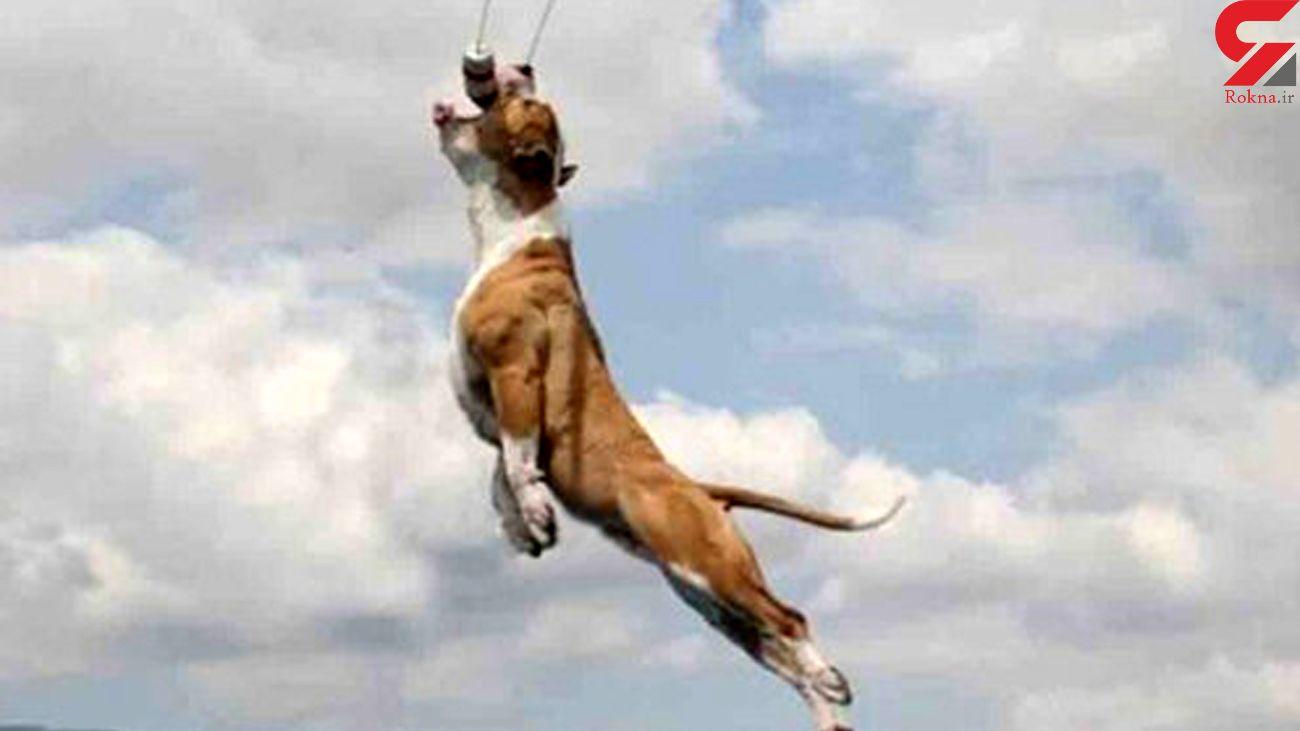 این سگ به پرواز در آمد + فیلم