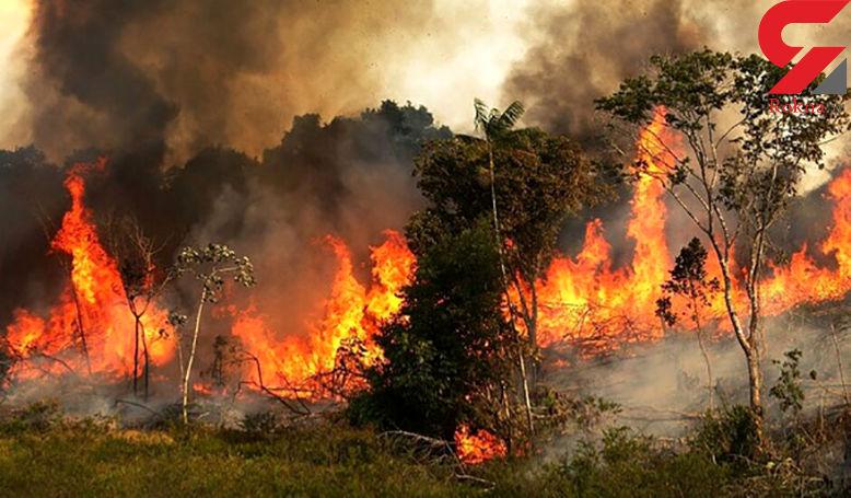 جنگل های رودبار آتش گرفت