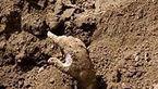 نجات 2 جوان 16 ساله و 18 ساله از زیر آوار در سمنان