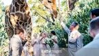 عجیب ترین عکس از یک عروسی! / میهمان زیباترین بود! + عکس