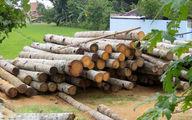 دستگیری قاچاقچی چوب در اشتهارد