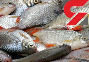 قیمت ماهی تازه دریای شمال در بازار