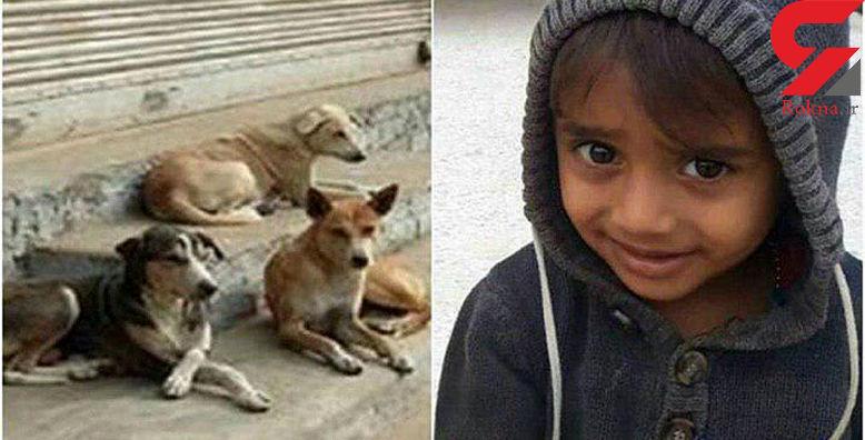 اولین عکس از کودک معصومی که خوراک سگ های ولگرد قشم شد + جزئیات