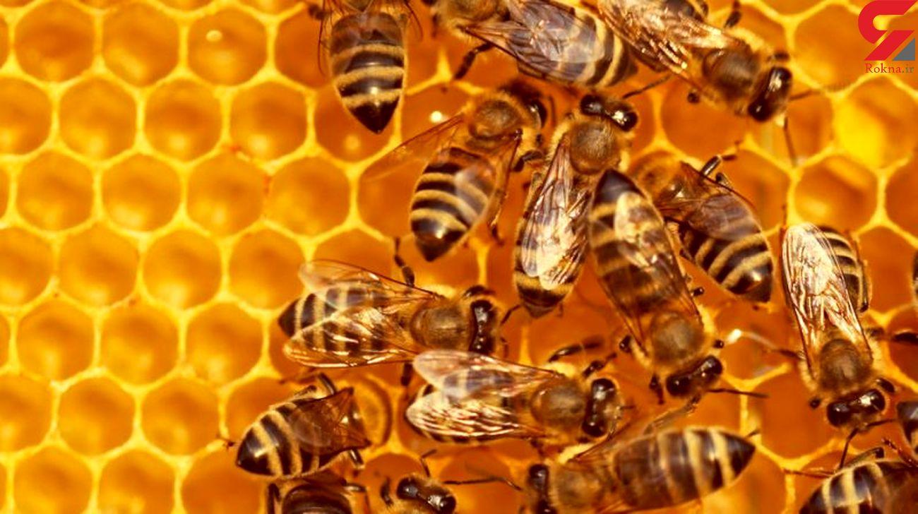 زهر سرطان پستان با زهر زنبور عسل گرفته شد
