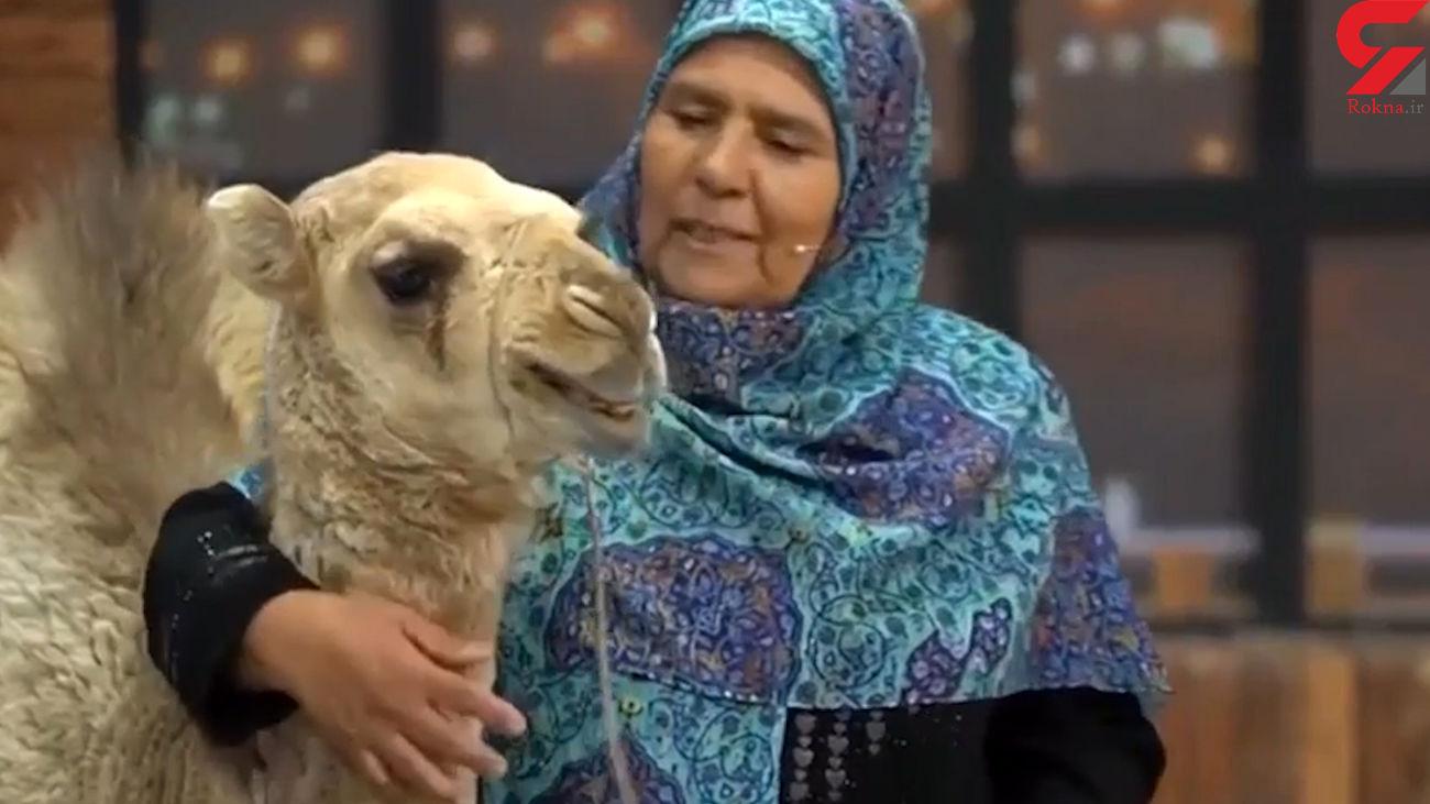 گریه بچه شتر در آغوش زن شهرستانی در صدا و سیما + فیلم