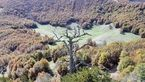 کاج 1230 ساله در اروپا هنوز هم رشد می کند+عکس