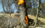 آتش سوزی جنگلهای گچساران مهار شد