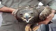 نجات یک  عقاب از مرگ در خاتم یزد + عکس