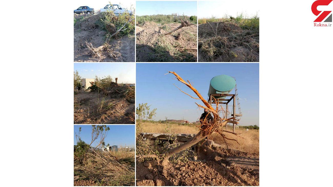 1000 درخت میوه در رباط کریم فدای اختلافات شخصی شد + عکس