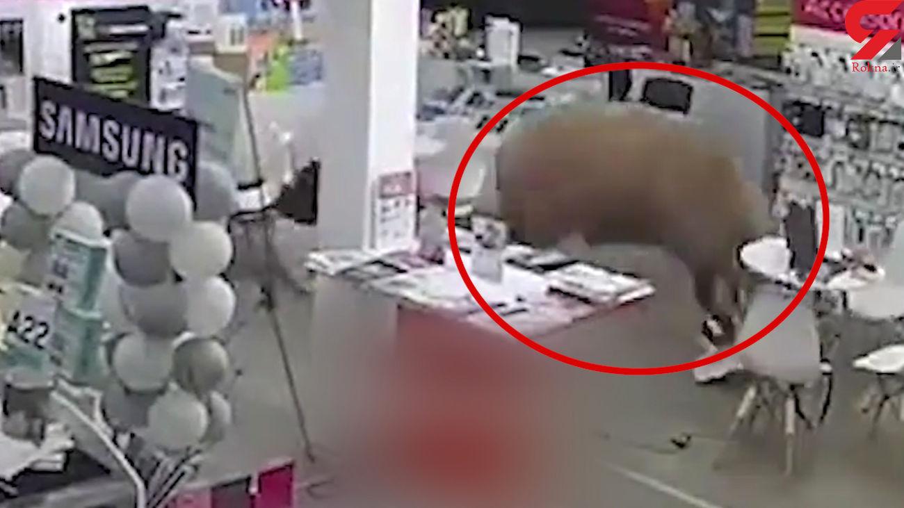فیلم عجیب از حمله گاو شاخدار به فروشگاه / یک زن را له کرد