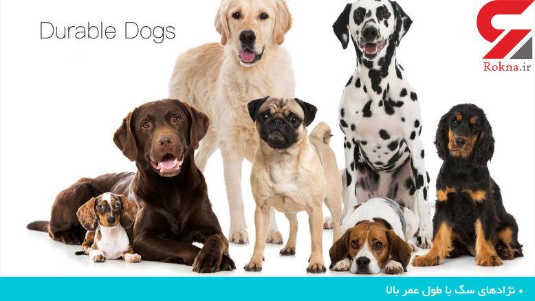 معرفی نژادهای مختلف سگ با طول عمرهای بالا +تصاویر دیدنی