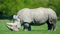 تجاوز به زندگی این حیوانات نسل شان را منقرض می کند