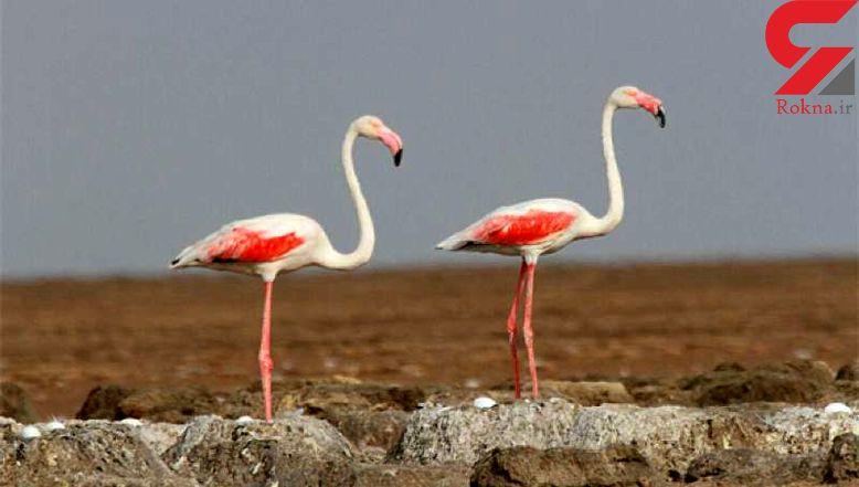 تعدادی از گونه های حیات وحش در خانه ای در  ملارد کشف شد