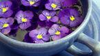 با خوردن این گیاهان بیهوش می شوید