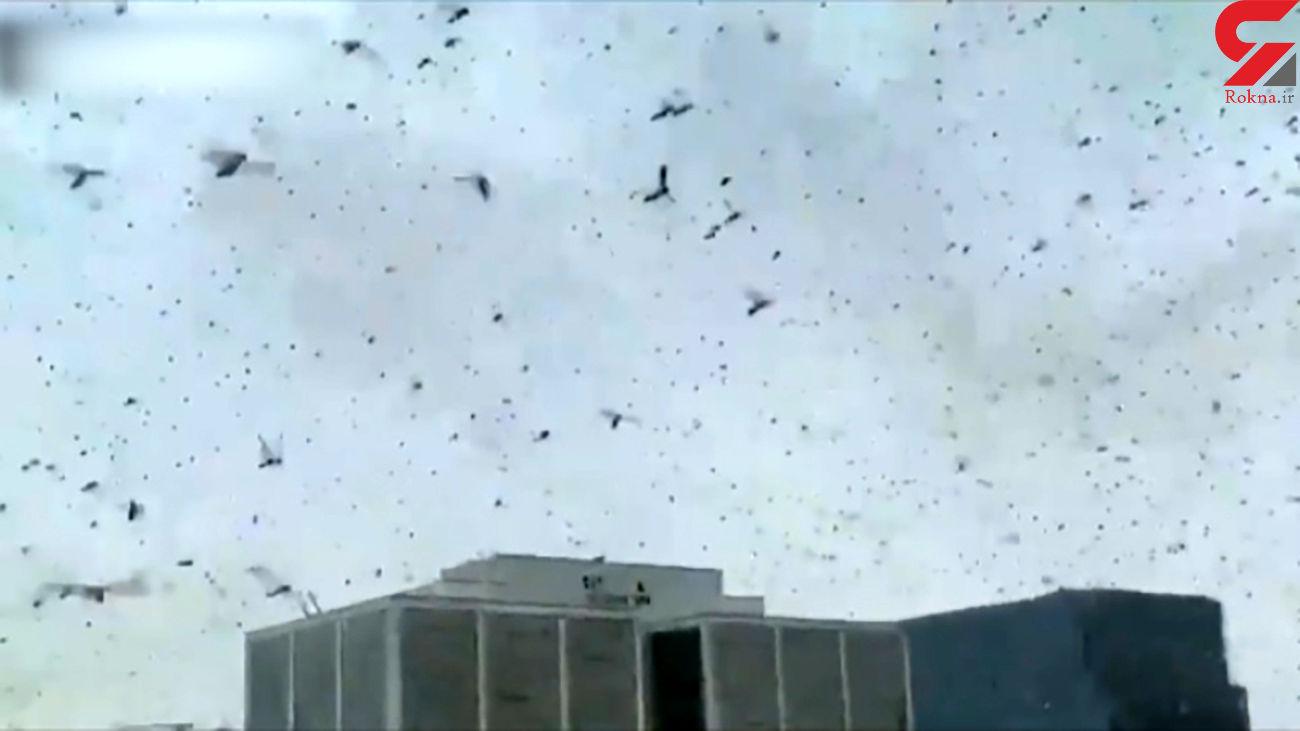 حمله ویرانگر ملخ ها به پایتخت هند + فیلم