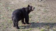 آزادی خرس اوکراینی پس از 16 سال +تصاویر دیدنی