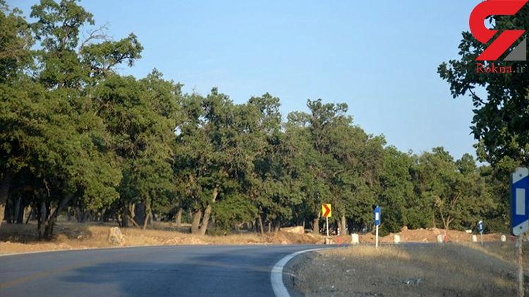 قطع  صد ها درخت 500 ساله بلوط در کهگیلویه وبویر احمد+ تصاویر