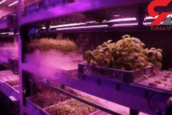 کشت گیاهان بدون خاک با سیستمی عجیب ممکن شد