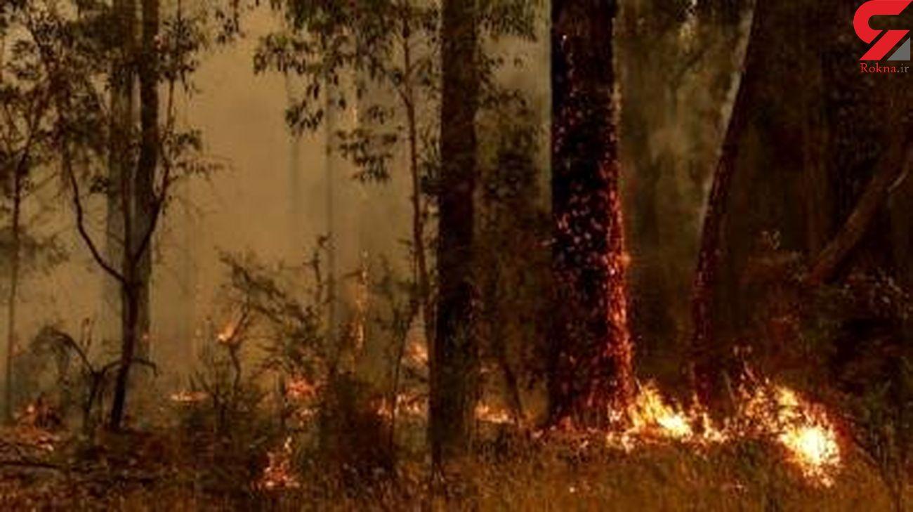 تلاش صدها آتشنشان برای اطفای حریق جنگلی در پرتغال