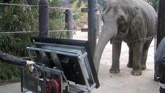 این فیل نابغه  مسائل ریاضی را در تبلت حل می کند! + عکس
