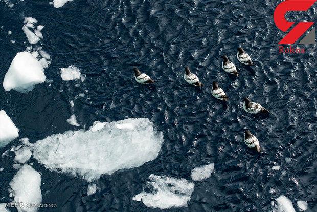 ذوب شدن یخ های قطب جنوب شدت گرفت