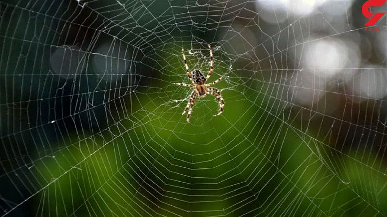 نحوه تنیدن تار توسط عنکبوت