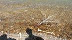 اسکلت های اجساد یک قبرستان آب  روستاییان را متعفن کرد+عکس
