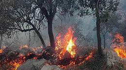 فاجعه / جنگلهای زاگرس 6 روز در آتش + فیلم ناراحت کننده