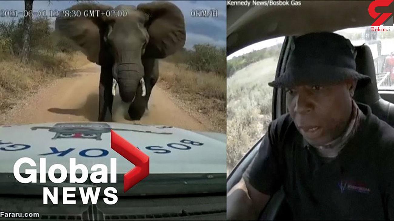فیل خشمگین خودرو را له کرد + فیلم