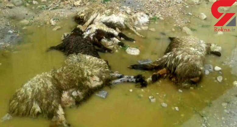سیلاب 100 راس گوسفند را در سبزوار تلف کرد