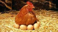 قیمت مرغ و تخم مرغ امروز یکشنبه 20 مهر ماه 99 + جدول