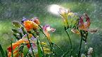 تصویرهای هنرمندانه از آبیاری گلها + فیلم