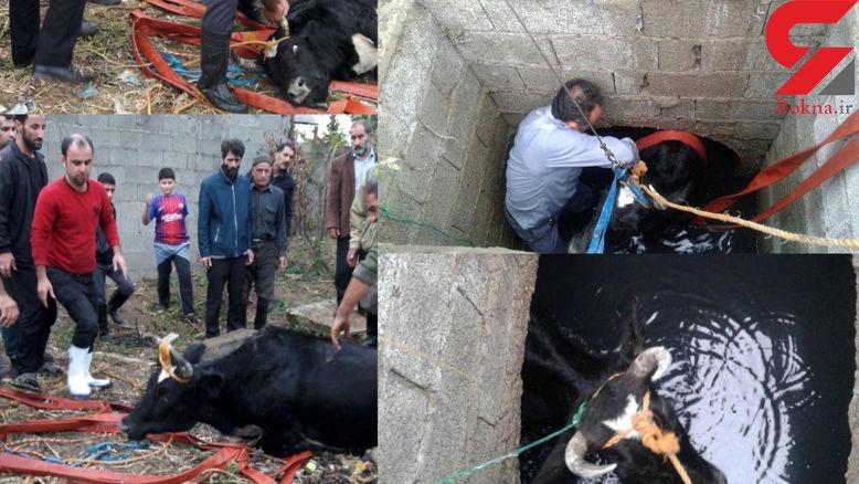 حادثه عجیب برای گاوغول پیکر در مولوی تهران! + عکس های عجیب