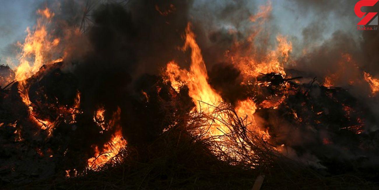 علت آتشسوزی جنگلهای کوهدشت مشخص شد