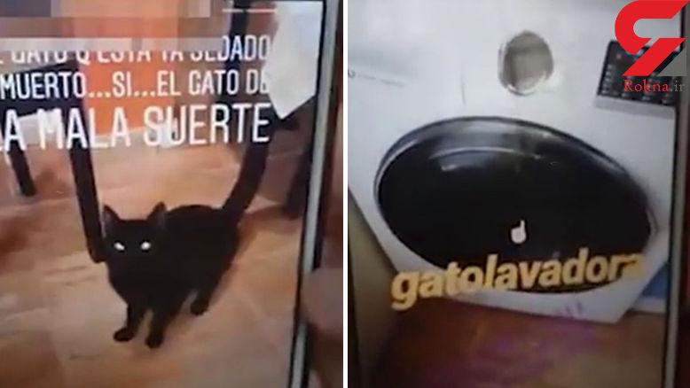زن جوان گربه نگونبخت را داخل ماشین لباسشویی روشن انداخت تا بمیرد!+ فیلم