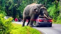 استراحت فیل روی یک خودرو در تایلند / خودروی لاکچری له شد
