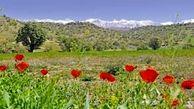 خطر انقراض 140 گونه گیاهی در البرز
