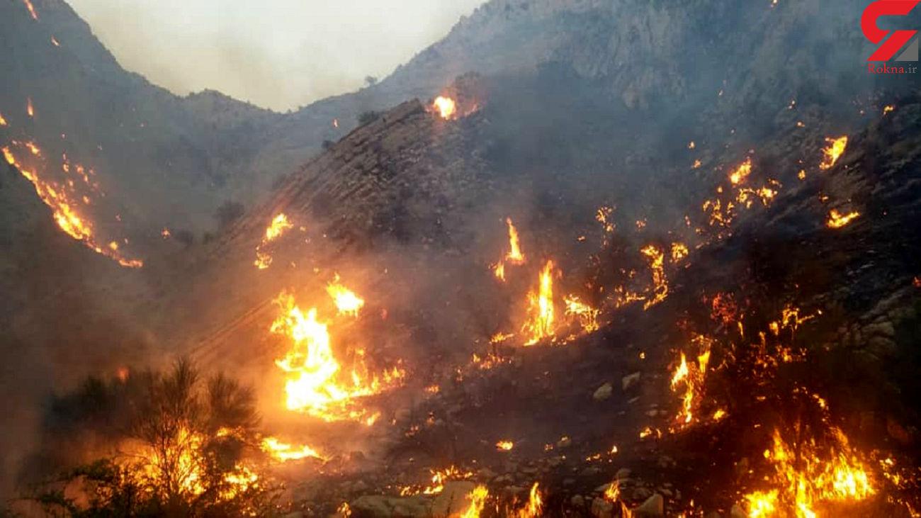 مهار کامل آتش سوزی در تنگ سدر دشتی / 33 ساعت طول کشید