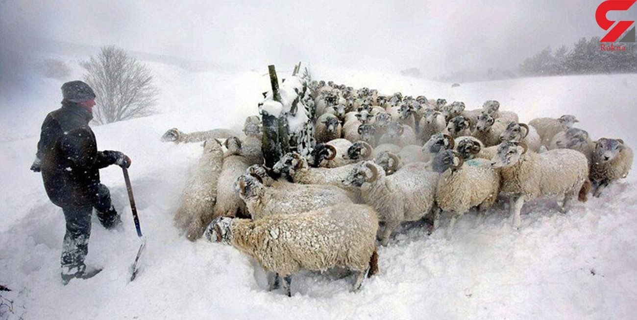 گمشدن 5 چوپان قوچانی در برف و کولاک