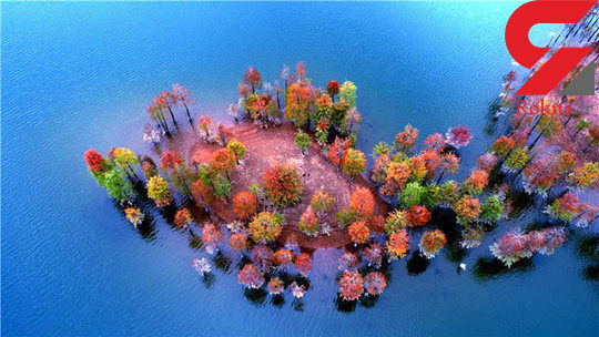 جنگلهای هزار رنگ فریبنده+تصاویر