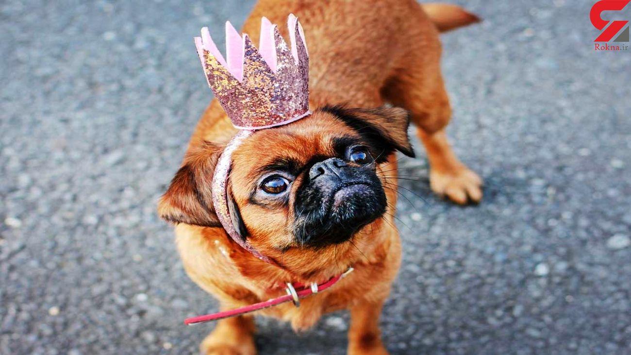 پولدارترین حیوانات خانگی را بشناسید + عکس