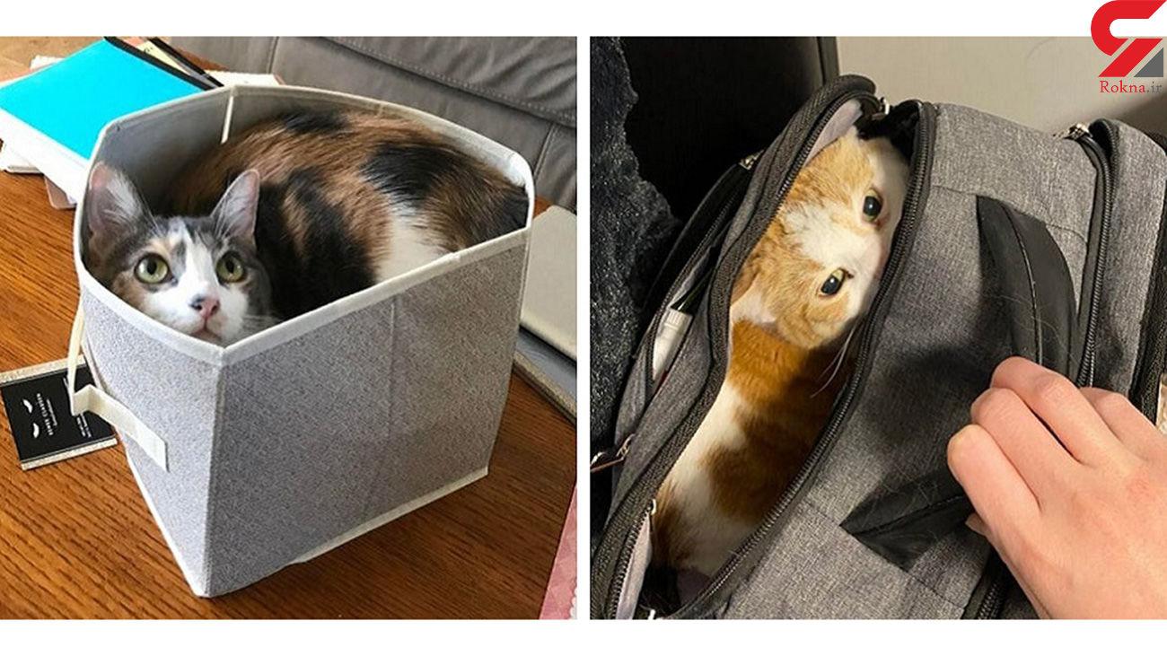 گربهها عاشق کجاها هستند ؟ + عکس