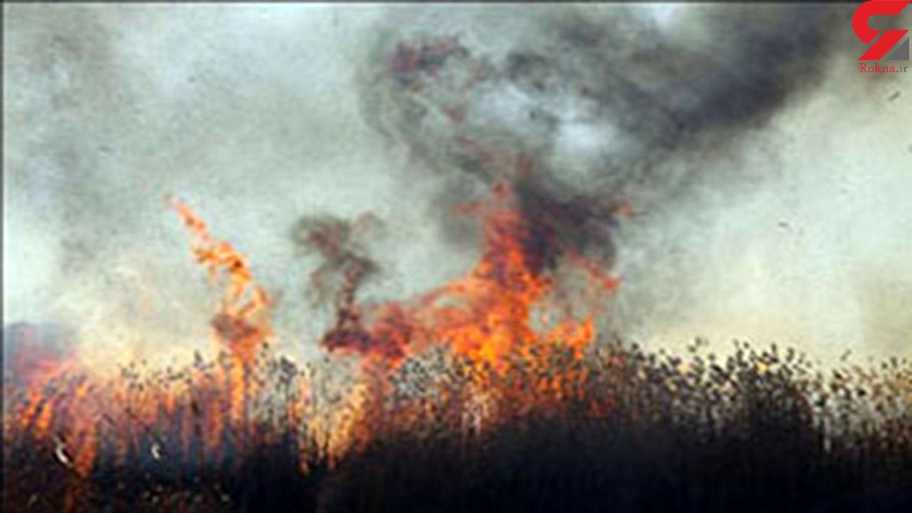 آتش افروز دشت ارژن فارس دستگیر شد / آتش سوزی عمدی بود