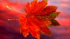 این گیاه در کاهش چین و چروک های پوستی جادو می کند