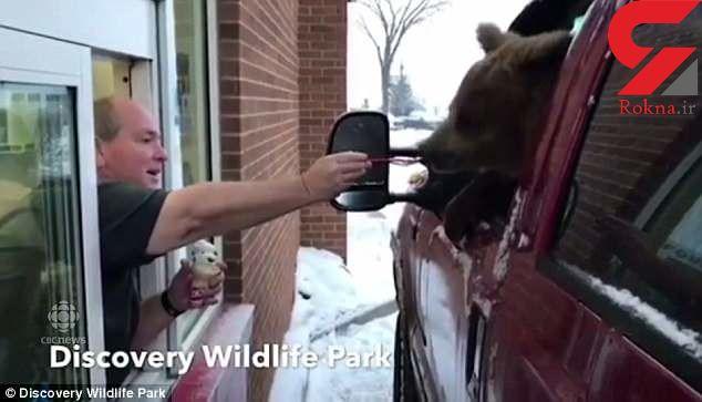 کارمند باغ وحش خرس را برای خوردن بستنی با خود بیرون برد + فیلم