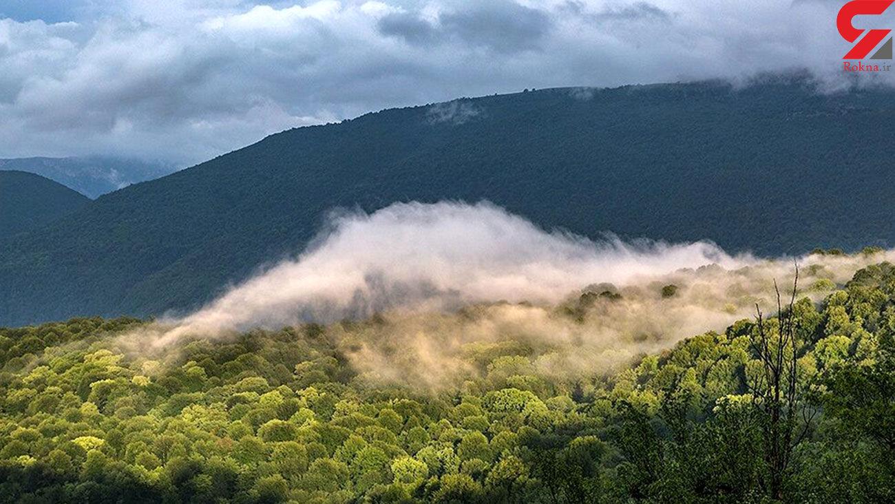 پرونده حکم ۵۶۰۰ هکتاری و خطر حذف جنگلهای هیرکانی از ثبت جهانی؟